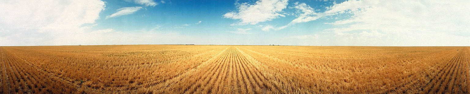 Cut Wheat