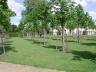 Poet's grove