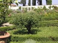 Main garden behind the villa